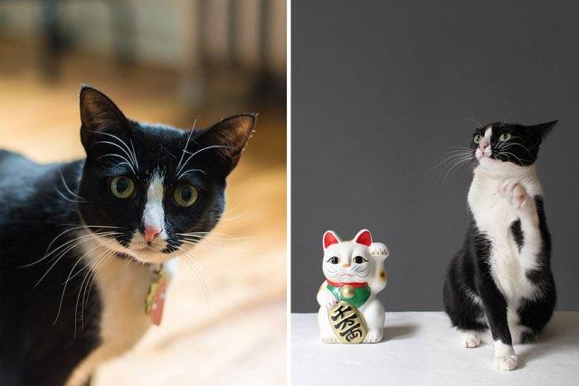 fotos-gatos-celebres-instagram-duenos-eeuu-meow-quarterly (15)