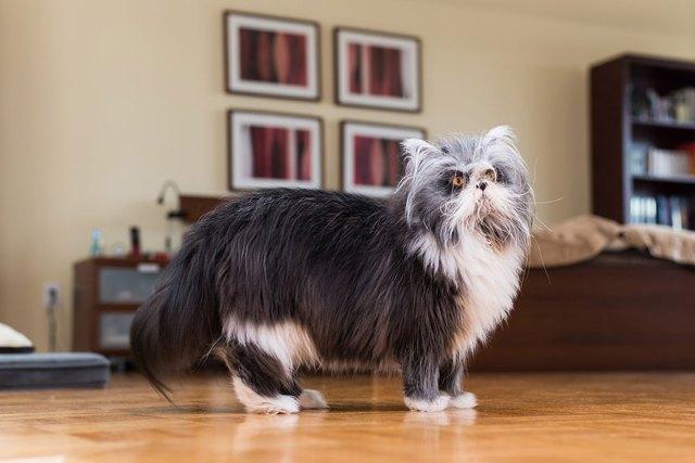 fotos-gatos-celebres-instagram-duenos-eeuu-meow-quarterly (18)