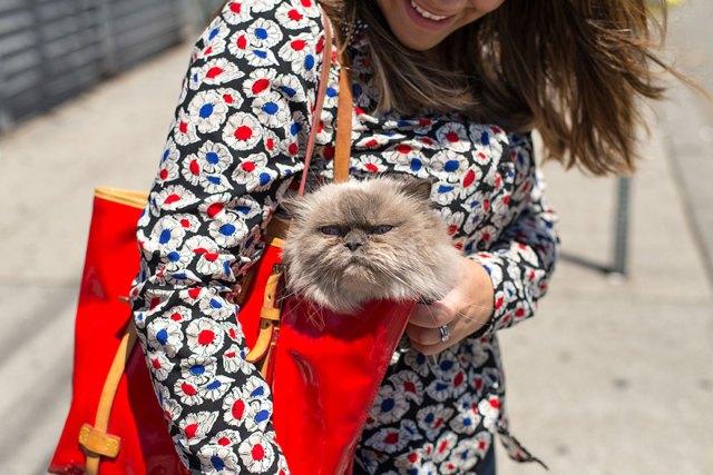 fotos-gatos-celebres-instagram-duenos-eeuu-meow-quarterly (22)