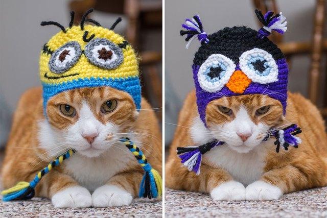 fotos-gatos-celebres-instagram-duenos-eeuu-meow-quarterly (24)