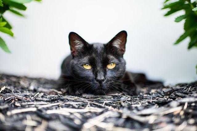 gatos-mostrando-emociones (7)