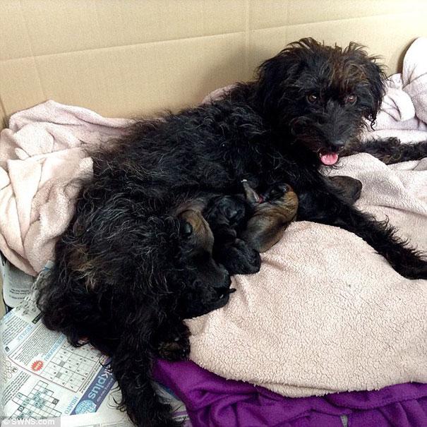 perro-pepper-adoptado-salva-mujer-asaltantes-creta-georgia-bradley (1)
