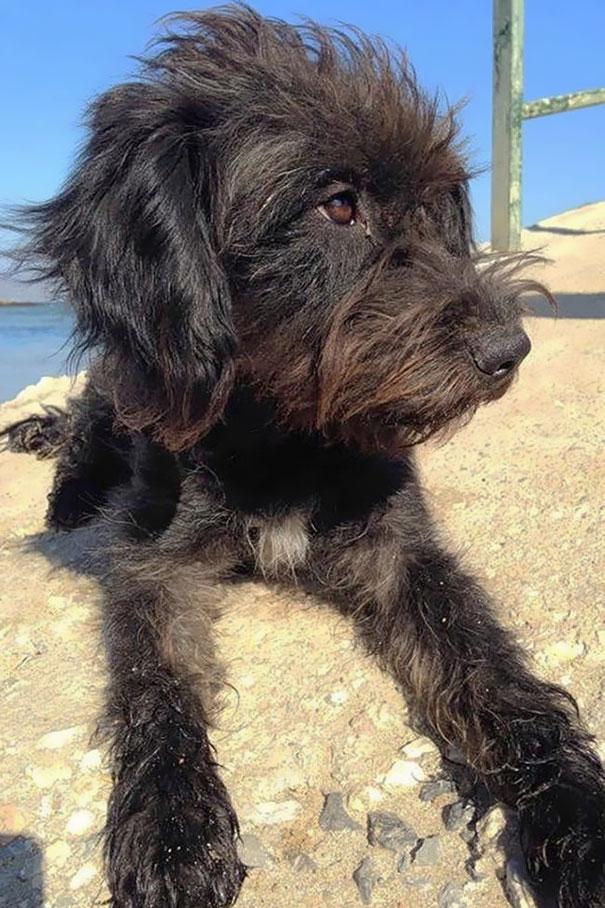 perro-pepper-adoptado-salva-mujer-asaltantes-creta-georgia-bradley (3)
