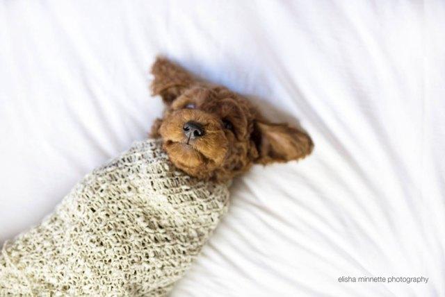 sesion-fotos-recien-nacido-perro-humphry-elisha-minette (11)