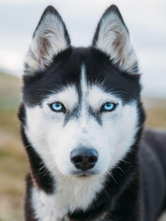 acampada-esqui-noruega-perro-husky-henrik-vikse (3)