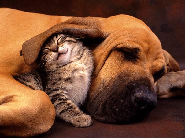 amistad-perros-gatos (12)