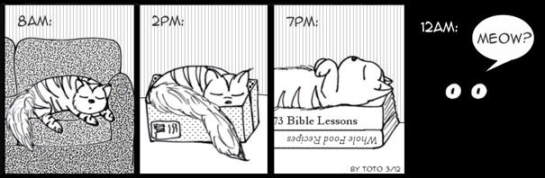 comics-convivir-gatos (5)