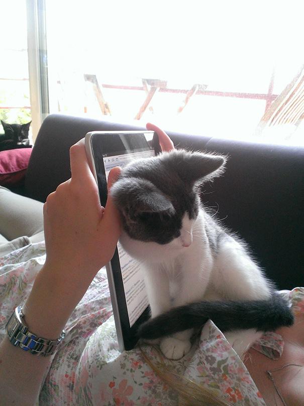 gatos-ajenos-espacio-personal (10)