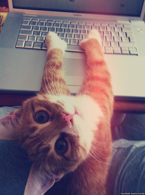 gatos-ajenos-espacio-personal (3)