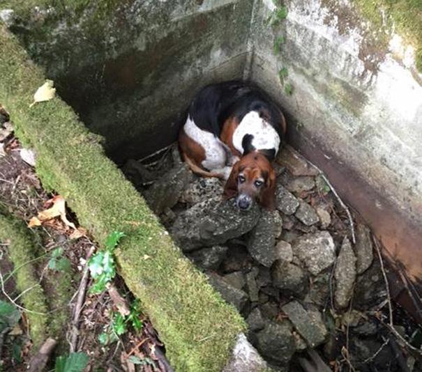 perro-monta-guardia-companera-atrapada-ayuda (2)