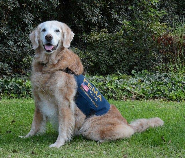perro-rescate-11s-superviviente-16-cumpleanos-bretagne (2)