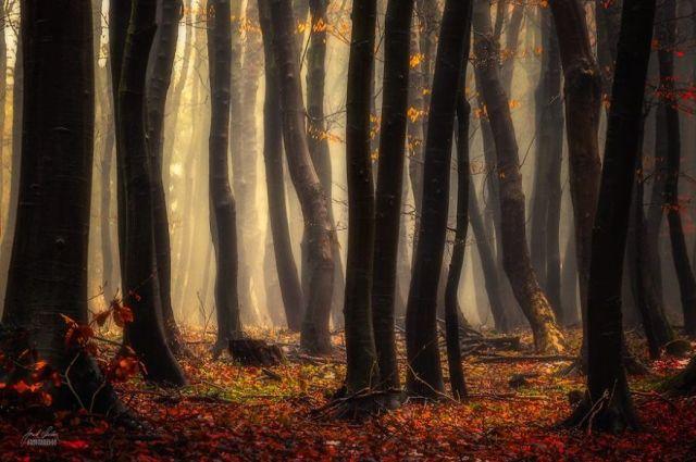 fotografia-bosques-otono-janek-sedlar (14)