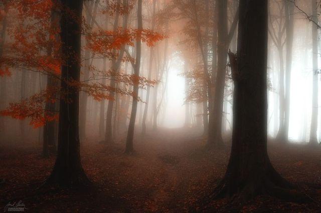 fotografia-bosques-otono-janek-sedlar (5)