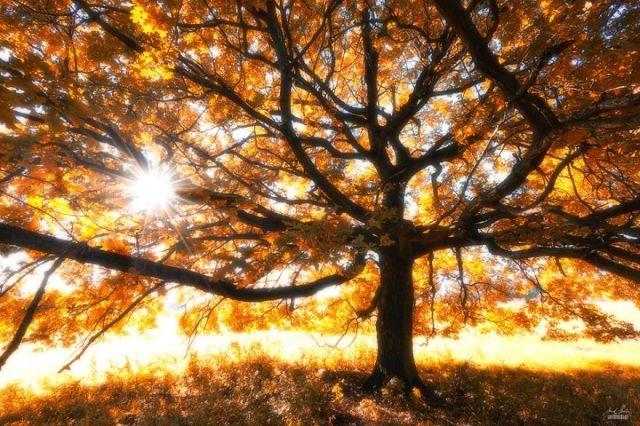 fotografia-bosques-otono-janek-sedlar (9)