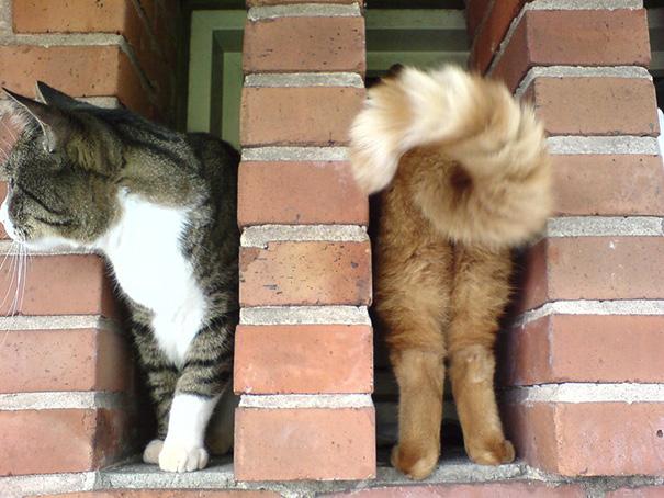 fotos-gatos-momento-justo (6)