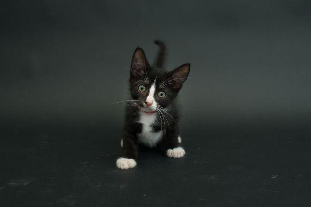 fotos-gatos-negros-adopcion (10)