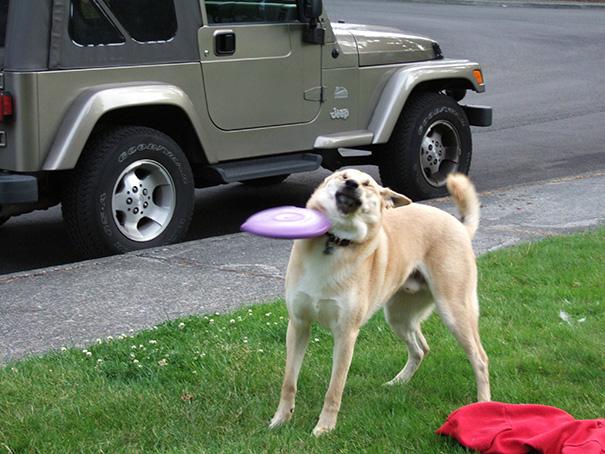 perros-cometiendo-errores (18)