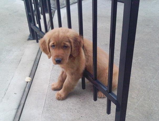 perros-cometiendo-errores (7)