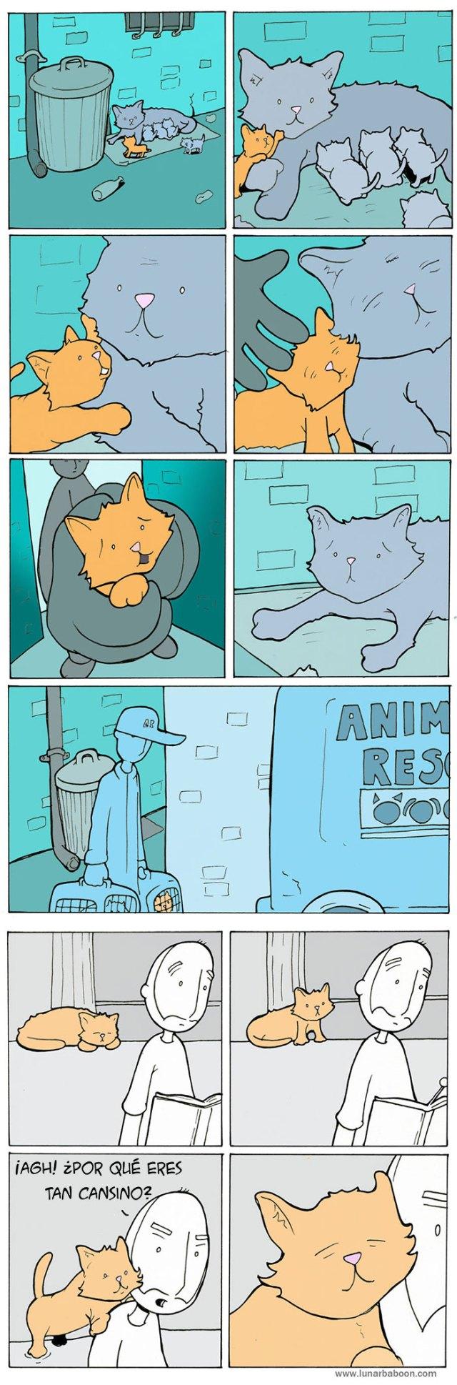 comic-gatos-lunar-baboon (5)