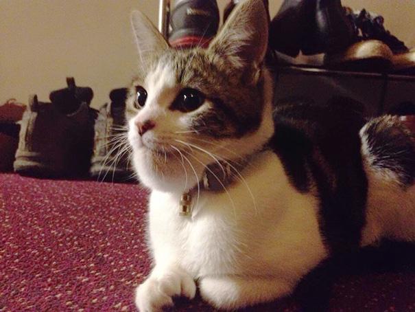 gatos-con-picaduras-de-abejas (2)