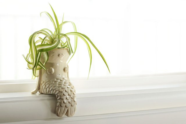 macetas-creativas-plantas (1)