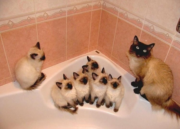 orgullosas-mamas-gato (5)