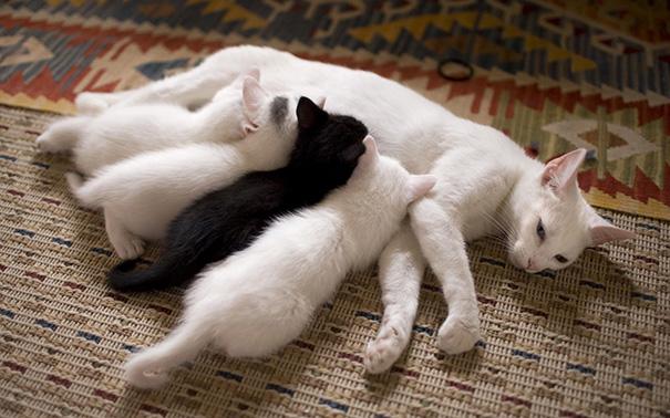 orgullosas-mamas-gato (8)