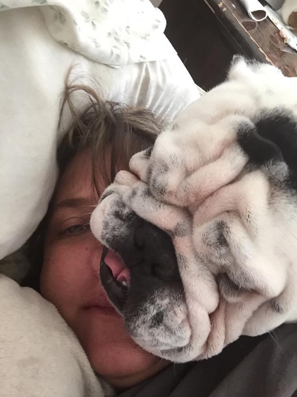 perros-violando-espacio-personal (6)