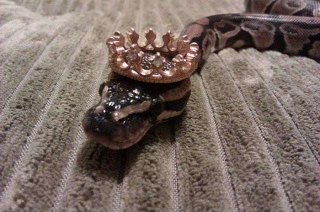 serpientes-llevando-sombrero (6)