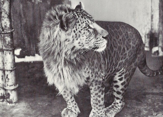 animales-hibridos-reales (14)