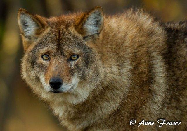 animales-hibridos-reales (5)