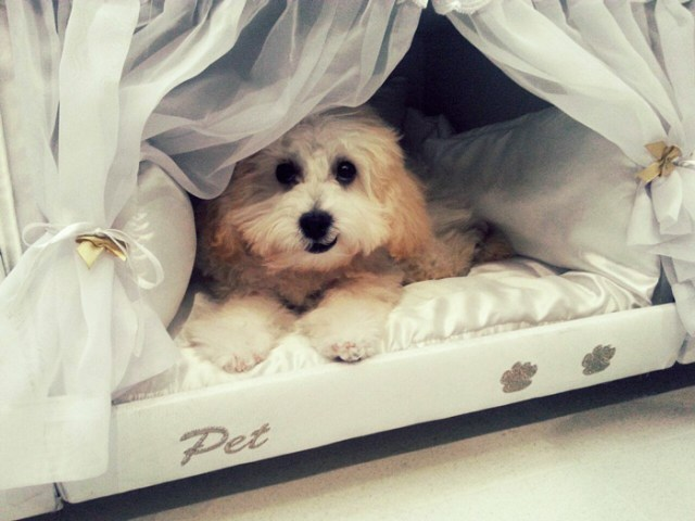 compartimento-mascotas-cama-colchao-inteligente-postural (1)