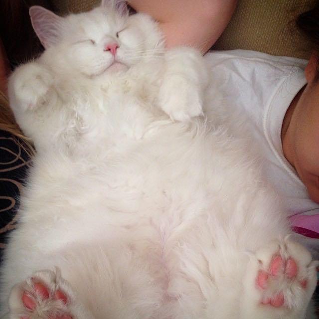gatito-suave-encontrado-lado-de-una-carretera (11)
