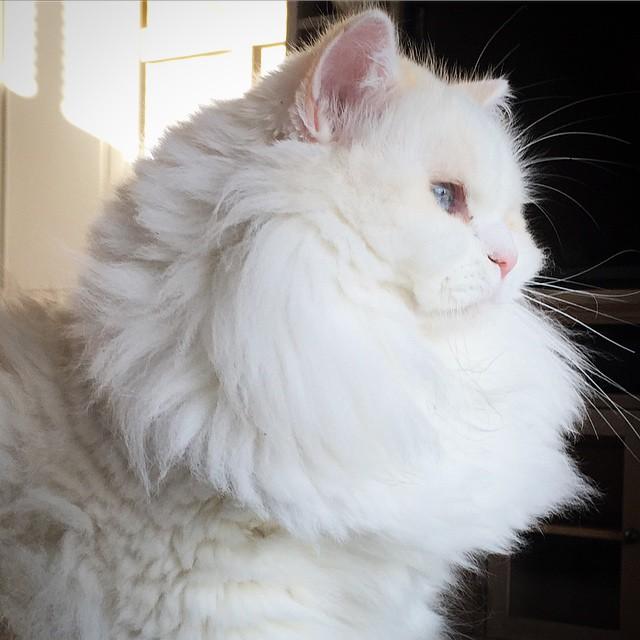 gatito-suave-encontrado-lado-de-una-carretera (7)