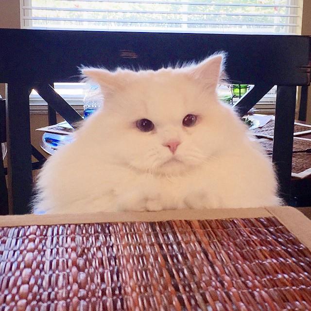 gatito-suave-encontrado-lado-de-una-carretera (8)