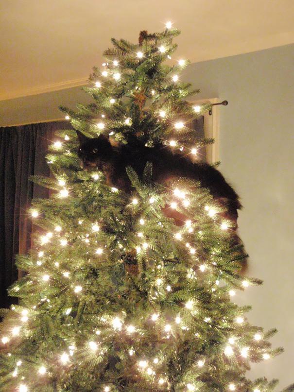 gatos-decorando-destruyendo-arbol-navidad (6)
