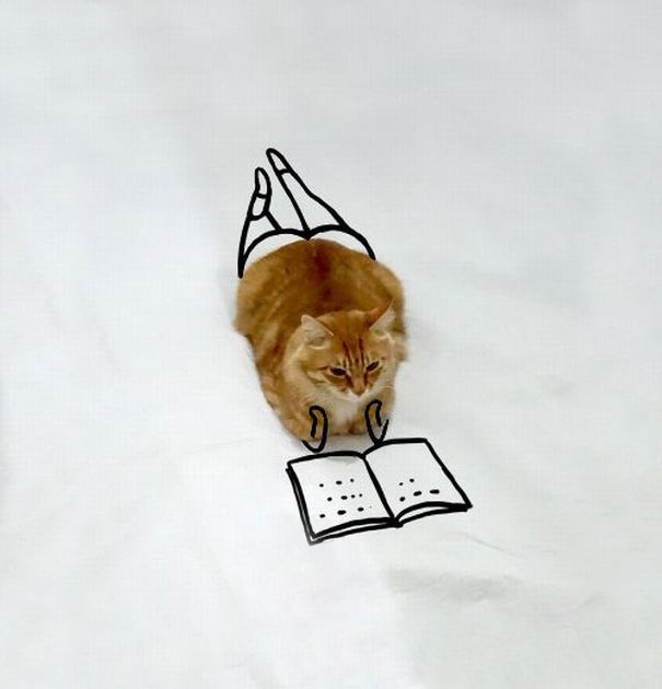 meme-foto-gato-dibujos-divertidos (15)