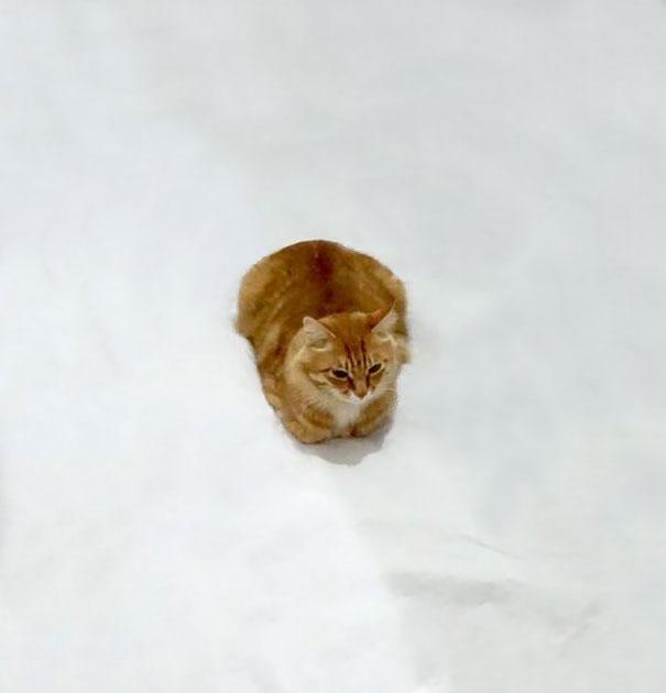 meme-foto-gato-dibujos-divertidos (4)