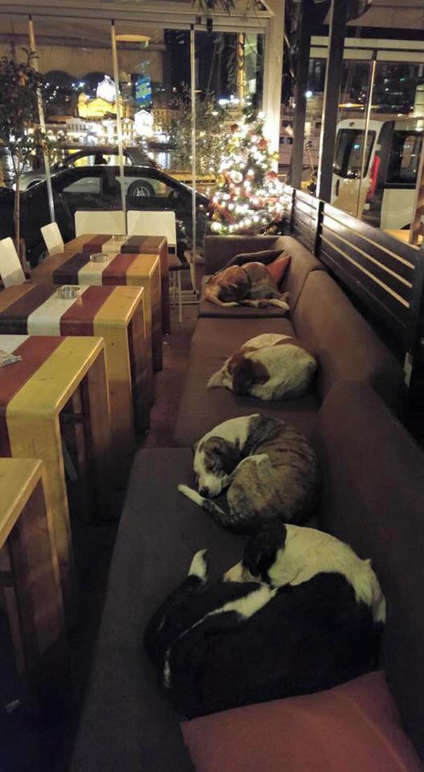 perros-callejeros-dormir-cafeteria-hott-spott-grecia (3)