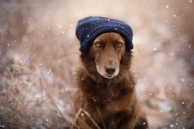 retratos-perros-naturaleza-anne-geier (26)