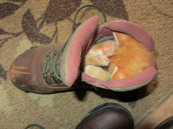 animales-durmiendo-cualquier-sitio- (3)