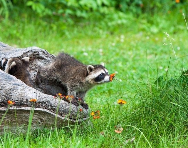 animales-oliendo-flores (15)