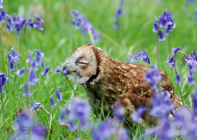 animales-oliendo-flores (3)