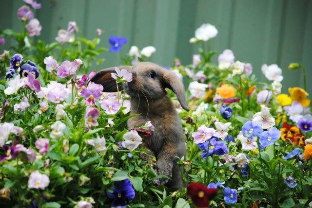 animales-oliendo-flores (4)