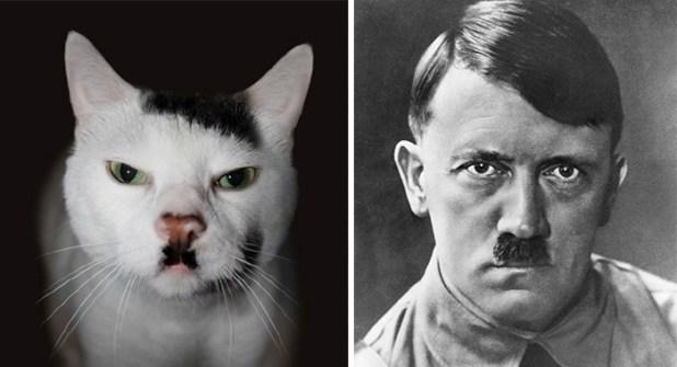 animales-parecidos-celebridades (7)