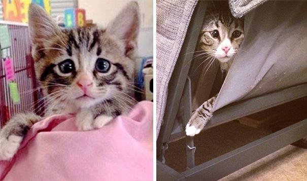 bum-gato-ojos-preocupados (3)