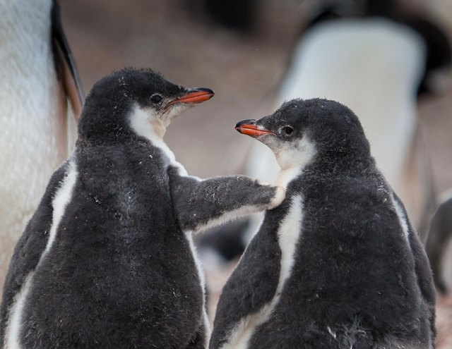 dia-concienciacion-pinguinos (13)