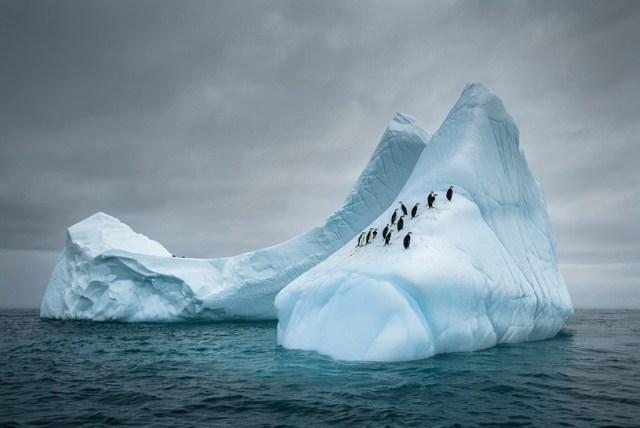 dia-concienciacion-pinguinos (25)