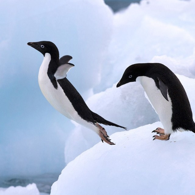 dia-concienciacion-pinguinos (35)