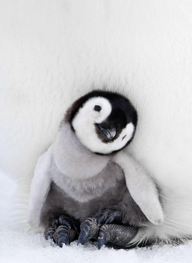 dia-concienciacion-pinguinos (39)